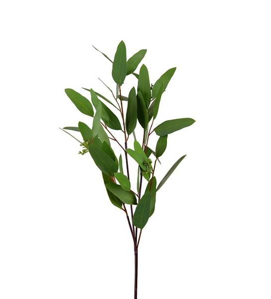 Eucalyptus (grønn 80 cm)